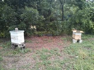 hive1 and hive2