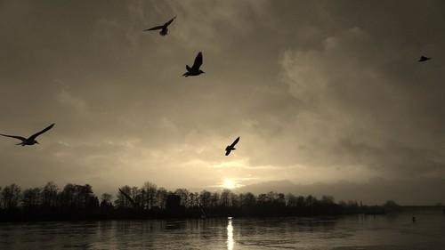 sunset germany bremen riverweser