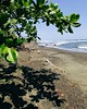 Welcome to the #wild and #lonely #beaches of #Cahuita #CostaRica #PlayaGrande by @pgart