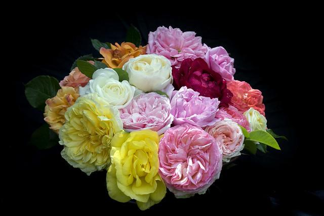 Roses In My Garden 115n
