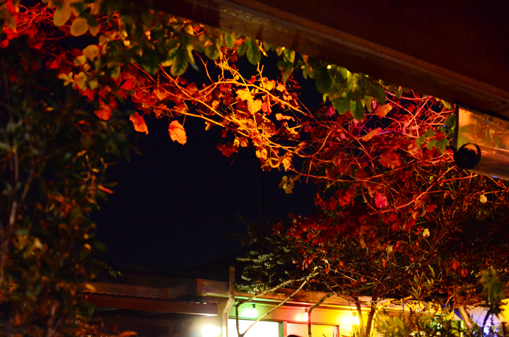 leaves and night lights