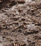 Making a Dirt Texture