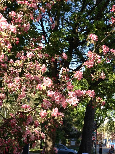Flowering Trees are in Full Bloom