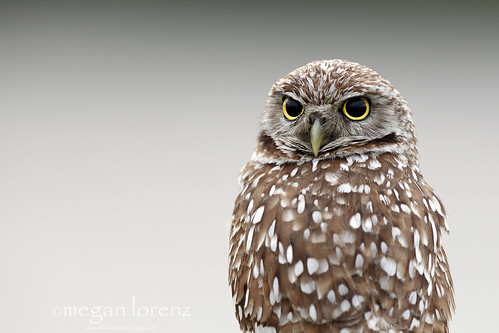 Owl Alone by Megan Lorenz