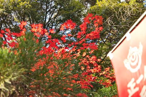 【写真】2012 紅葉 : 長岡天満宮/2020-10-09/IMGP6539