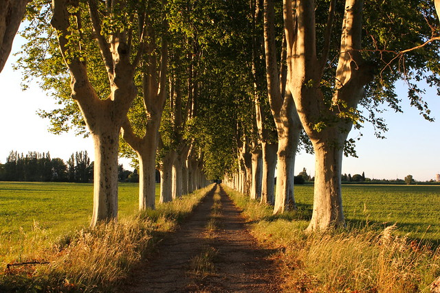 French tree-lined roads