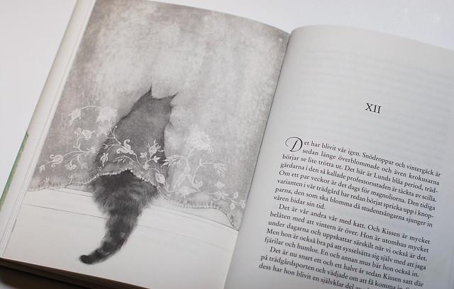 Katter i litteraturen