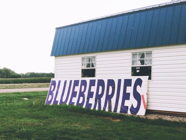 State of Nicole, Columbus, Columbus Ohio, Blueberries, Blueberry Farm