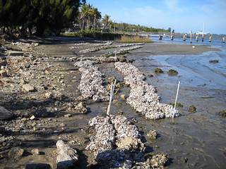 012112 Completed Oyster Reefs at the Riverside Marina (Looking North)