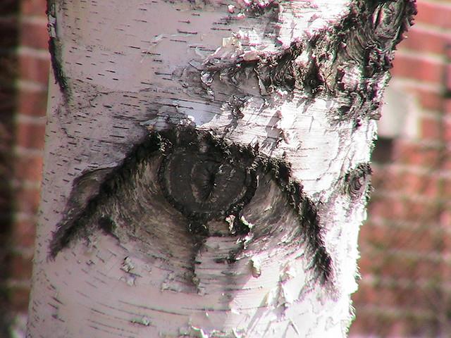 arbre 2003