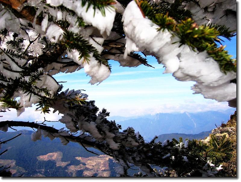 松枝殘雪 1