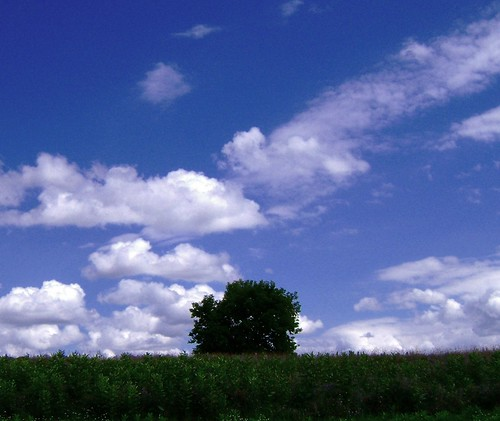 park november blue trees light shadow summer sky green grass clouds rural fun midwest pov michigan country august adventure 248 lonetree oaklandcounty lakeorion 2013 sooc sonydsc650