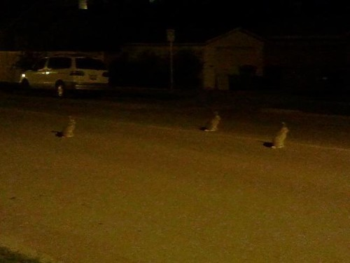 Three bunnies in the middle of the road at night.