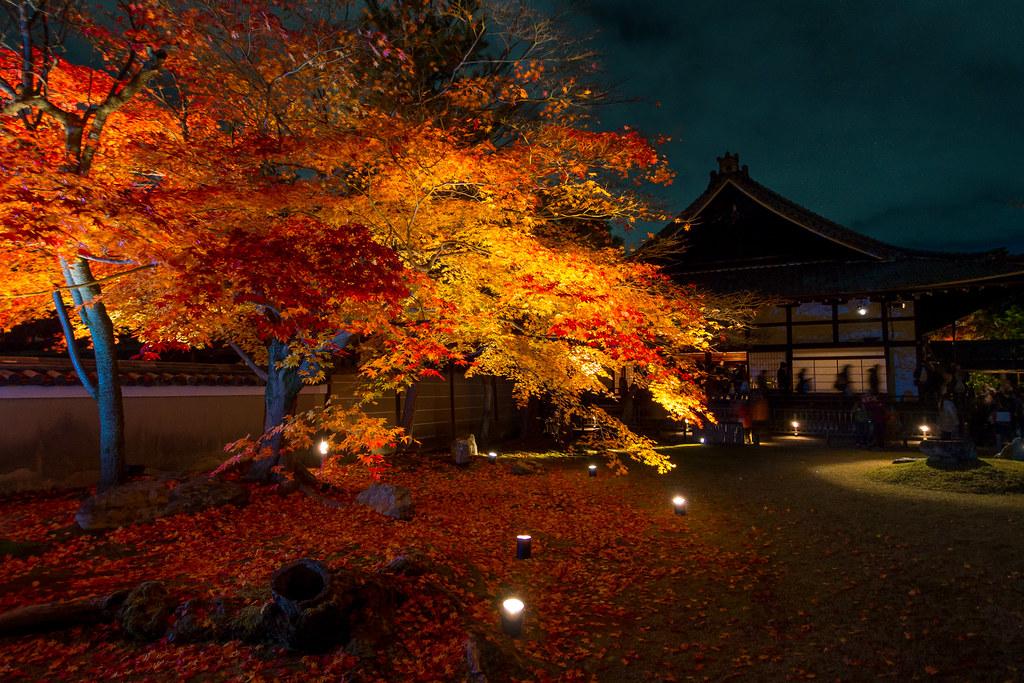 秋のライトアップ - 高台寺 / Kodai-ji Temple