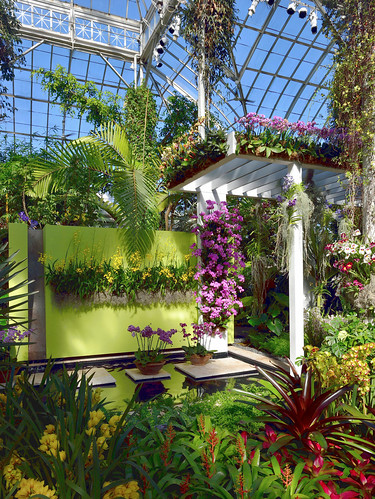 Orchids Under Glass
