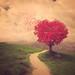 * Tree love *