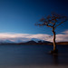 Lonely Tree by Paul McCreaddie