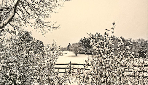 trees winter snow nature fence landscape annapolis hauntedhouse
