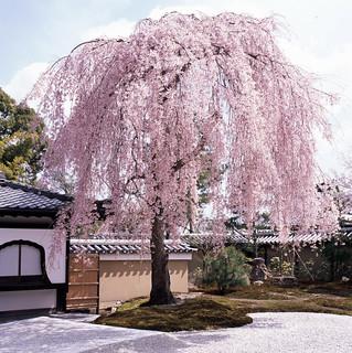 京都 高台寺 Kyoto, Japan