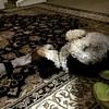 Mojo the Dog watching TV upside down!