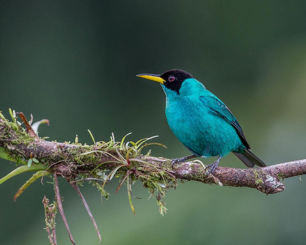 15 increíbles Parques Nacionales de Costa Rica