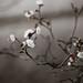 Bonsai by moaan