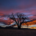 Never waste a sunset by wd.bowman