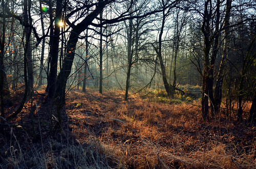 wood morning las trees winter light brown sun color tree green nature colors beautiful grass mystery forest sunrise ginger woods nikon branches magic meadow poland polska natura zima bagna gałęzie d7000