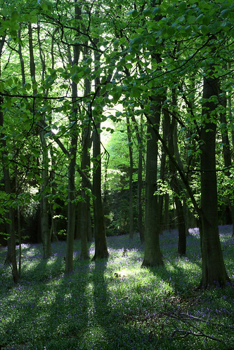 Kings Wood