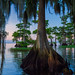 Inside the Cypress Trees by Michael Pancier Photography