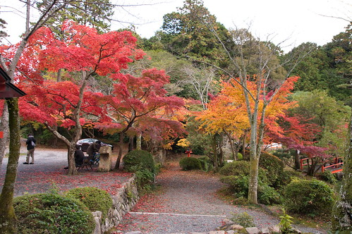【写真】紅葉 : 大原野神社