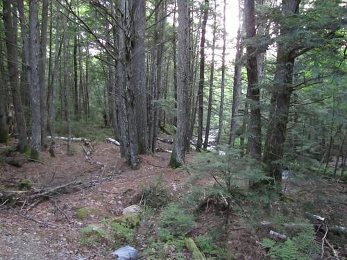 Woods off of Carter Meadow Rd