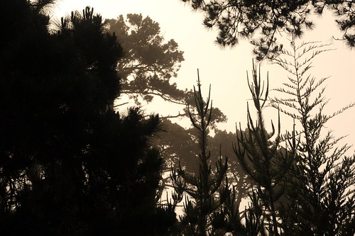 Tree silhouettes, Asilomar, Pacific Grove, California, USA by Wonderlane