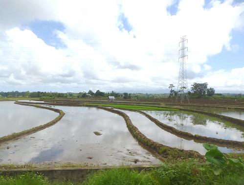 Sulawesi13-Bira-Bone-Kijang (18)