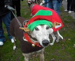 Jingle  Bell Walk 2010