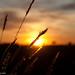 Amarillo Sunset by miko-la