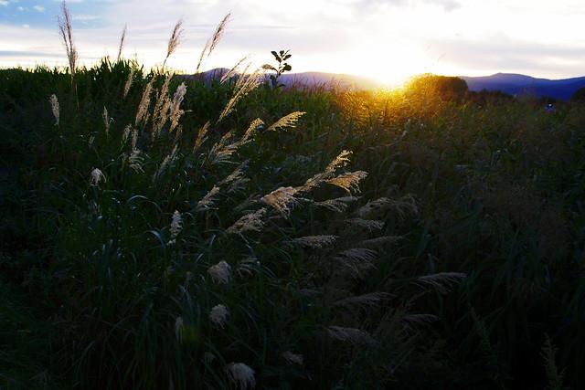 夕日を見つめて