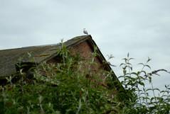 A Seagull Surveys