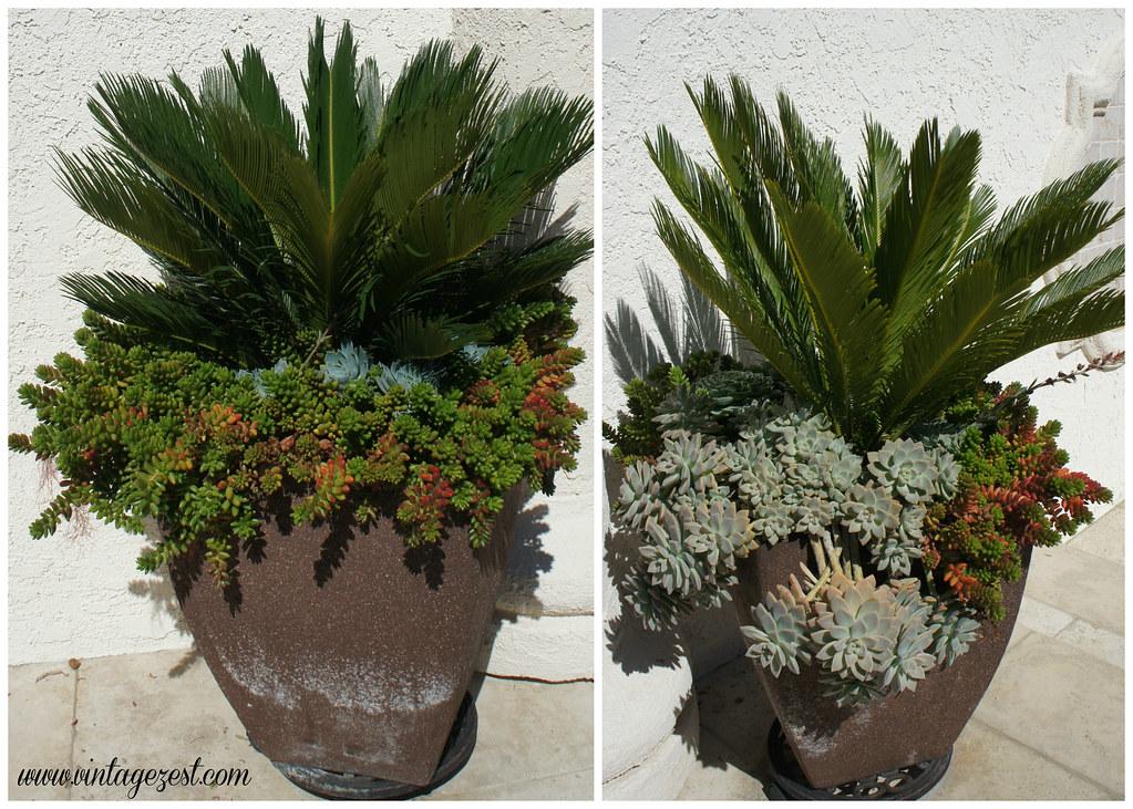 Succulent Garden 4