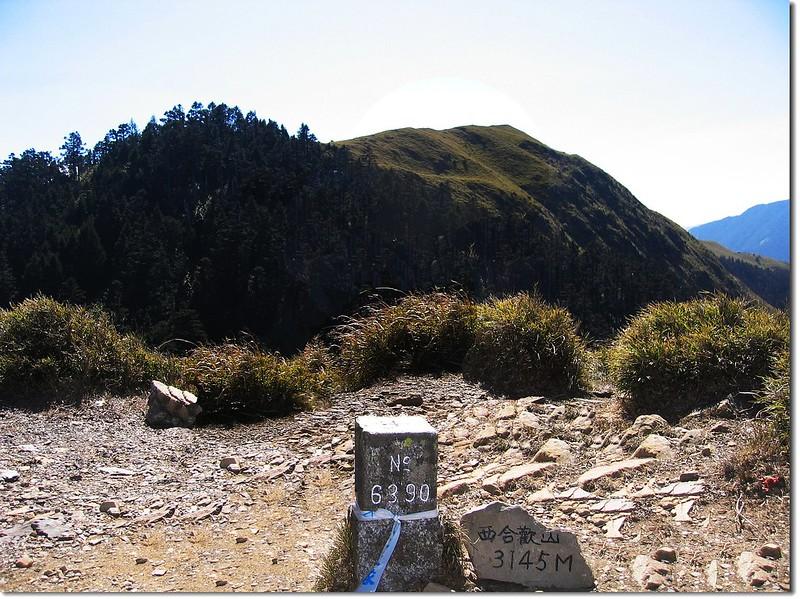 西合歡山三等三角點(#6390 Elev.3145 m)