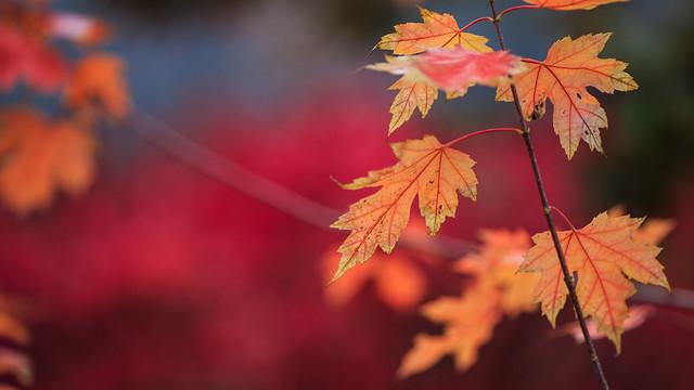 Lakeshore's Fall