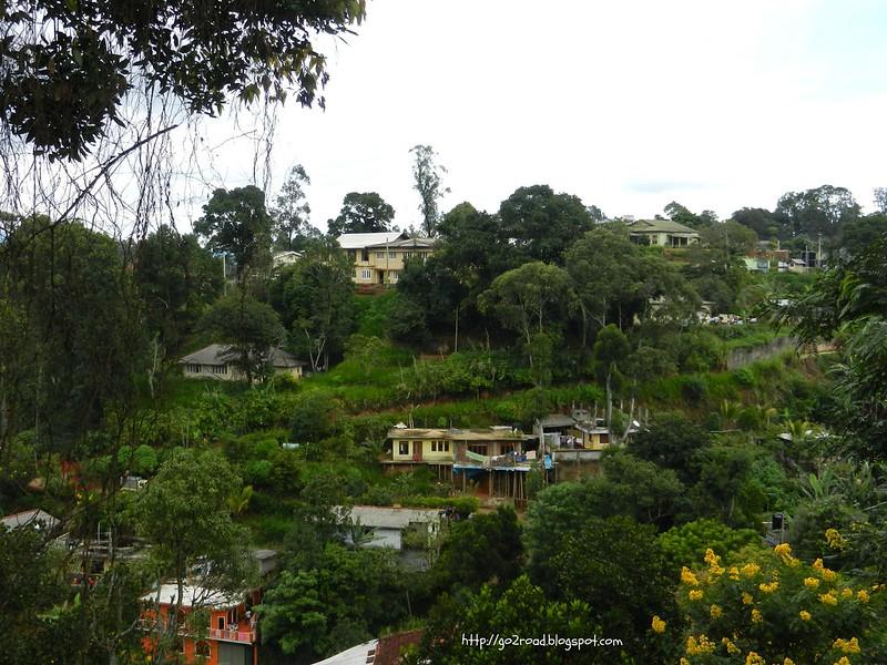 В горах Цейлона, где чай растет