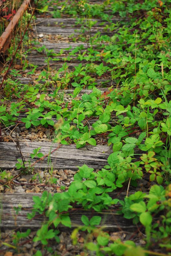vegetation in the railway