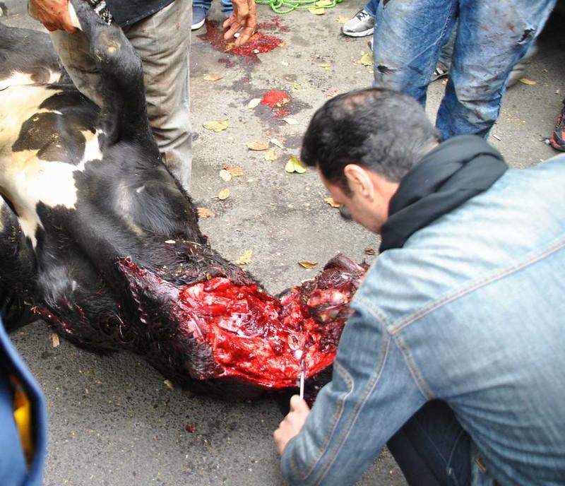 139 Ashura Tashoa dia 01 en  Teheran (59)