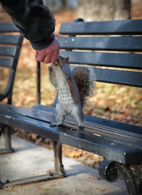 """""""I'm Just a Squirrel Trying To Get a Nut..."""""""