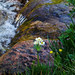 Serenity - Linda Haehnle