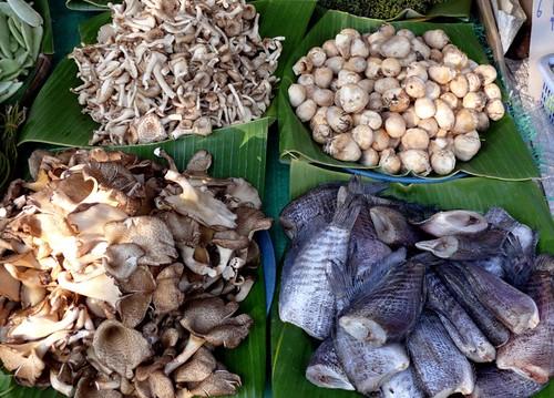 פטריות בתפזורת (טוב, גם קצת דגים), מהגינה הפרטית אל השוק