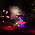 A fairy amongst the trees at Westonbirt's Enchanted Christmas