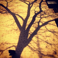 Just another branch in the #wall  #tree #shadows
