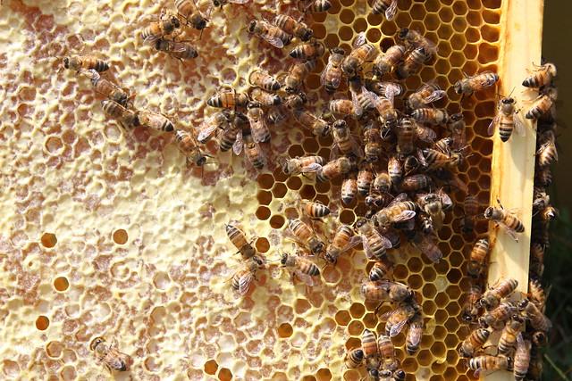 DL Hive Split 5/2/14